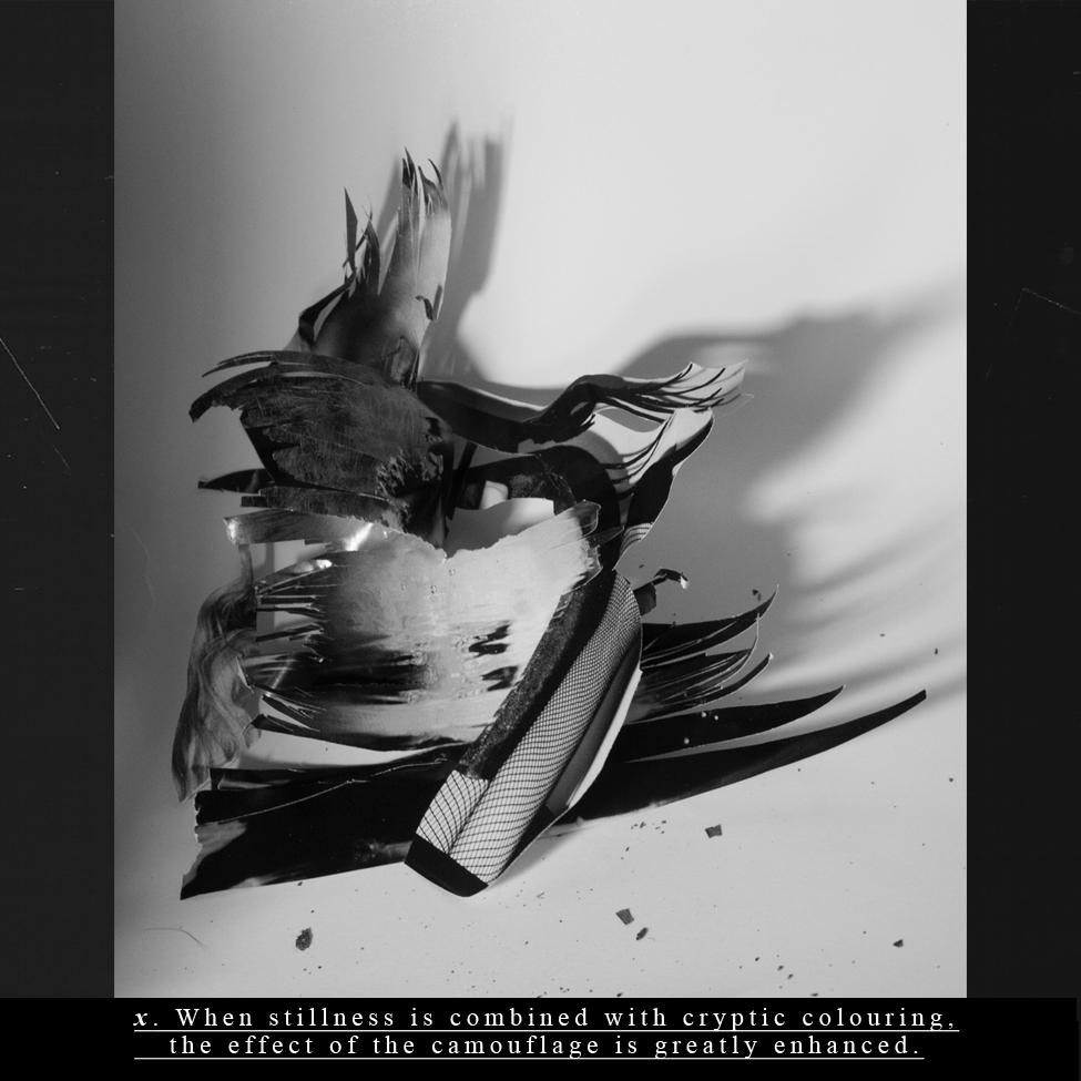 Danielle Rosen: An Encyclopedia—Exhibit on view January 25 through February 7, 2014
