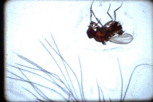 12Fruit-Flies_Christine-Lucy-Latimer_film-still_2